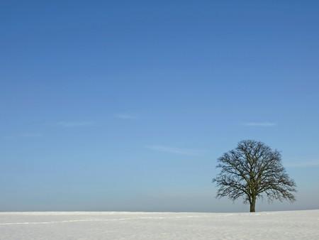 árbol durante el invierno