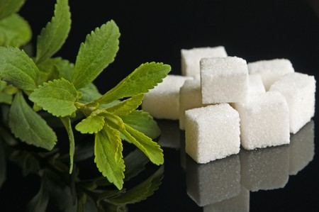 Stevia rebaudiana the herbal support for sugar Stock Photo