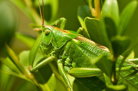 grasshopper Stock fotó