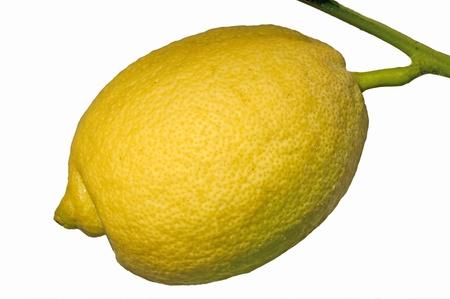 cidra: lim�n en un �rbol