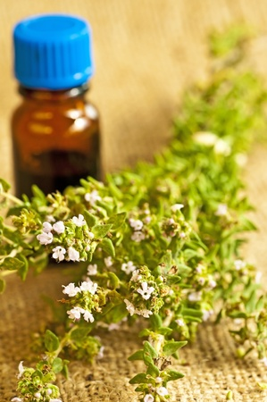 homoeopathic: thyme Stock Photo