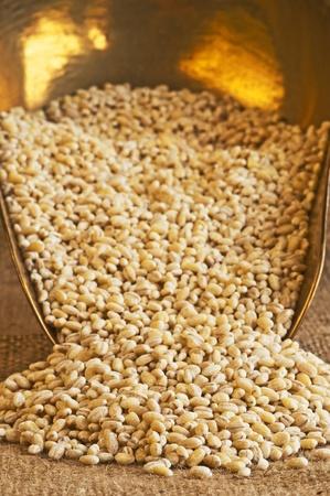 barley pearls photo