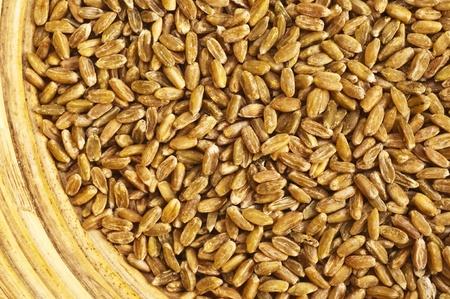 unripe:  unripe spelt grain