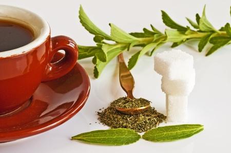 Stevia rebaudiana das pflanzliche Unterstützung für Zucker Lizenzfreie Bilder