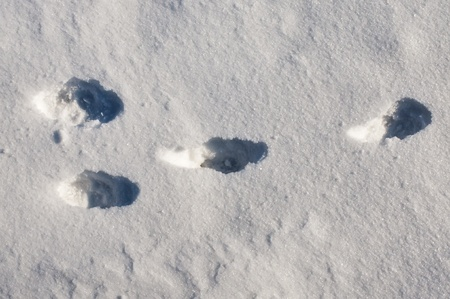 rabbit track in snow photo