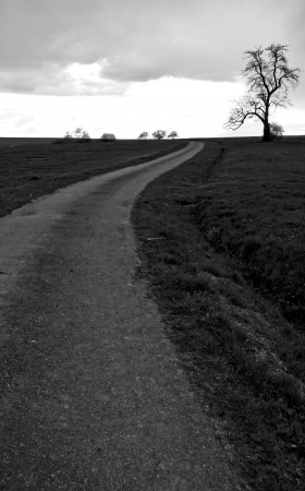 a way and a tree on a overcast day photo