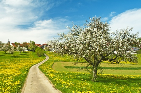 blooming fruit tree with village photo