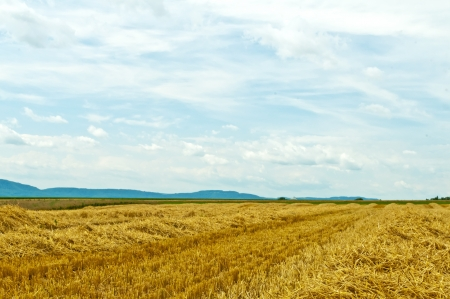 stubble field: stubble field with panoramic view