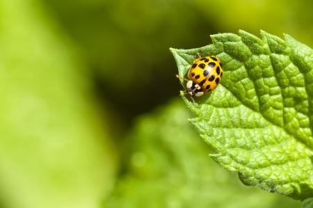 lady s: Se�ora s escarabajos