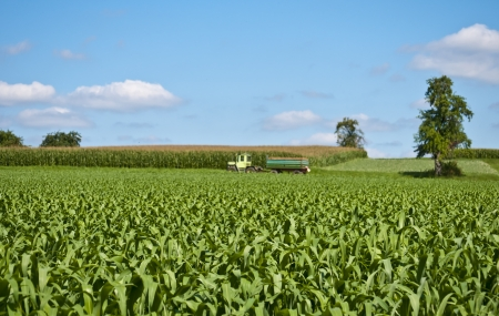 corn field with tractor photo