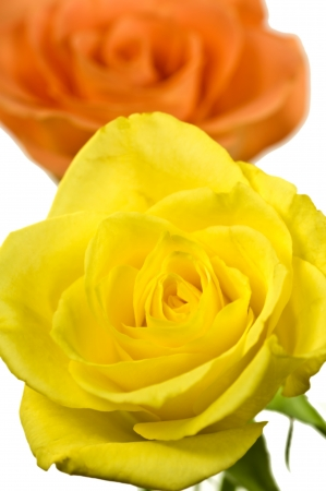 Roses in yellow and orange photo