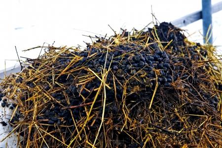 dung: dung hill
