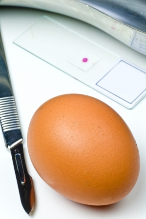 imposture: Examination of eggs