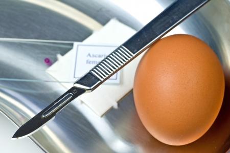 Examination of eggs