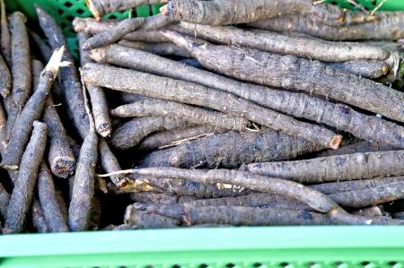 inulin: black salsify old forgotten vegetable