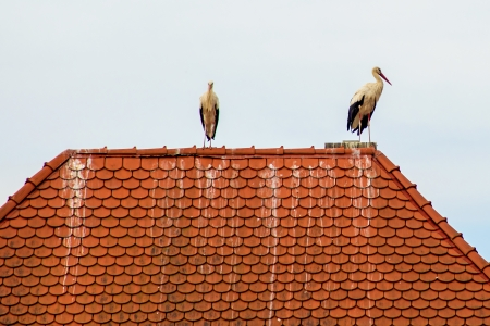 storks on a roof photo