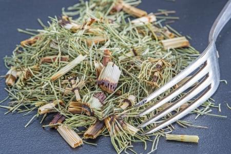 equisetum: horses tail, Equisetum arvense, medicinal plant