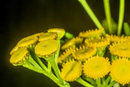 margen: Margen helecho, biol�gicamente insecticida