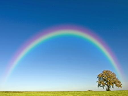 rainbow: Tree with rainbow