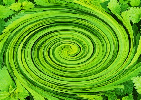 nettle: Green whirl of stinging nettles Stock Photo