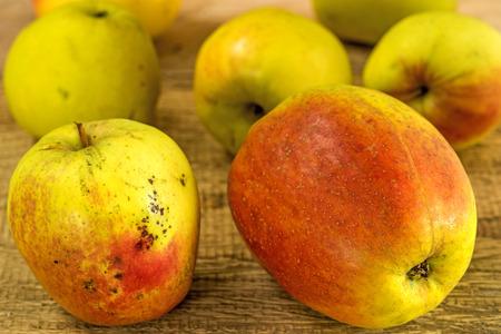 regional: Manzanas, producto org�nico regional