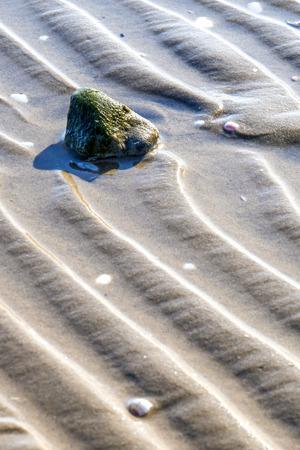 Beach with tracks photo