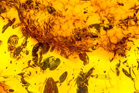 embedding: amber with inclusions