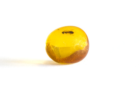 embedding: Amber with embedded insect Stock Photo