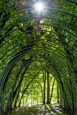 backlite: archway of hornbeams with sun reflection