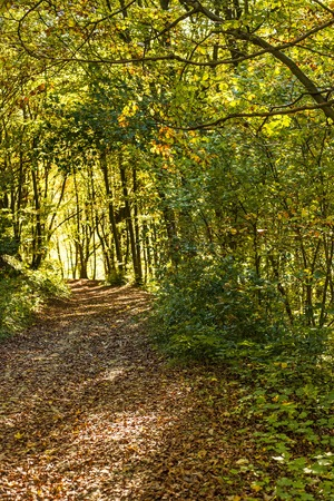 forest with autumnal painted leaves in warm, sunny color photo