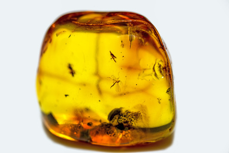 embedding: Amber with embedded insects Stock Photo