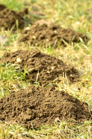 molehill: Molehills Stock Photo