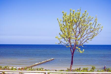 baltic sea: Tree at the Baltic Sea