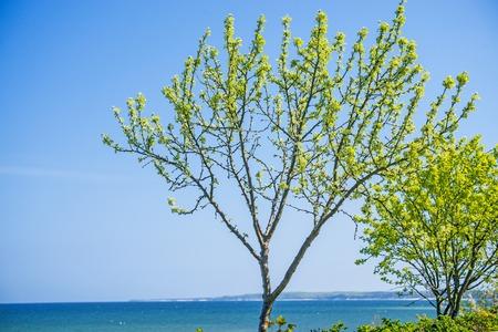 baltic sea: Trees at the Baltic Sea Stock Photo