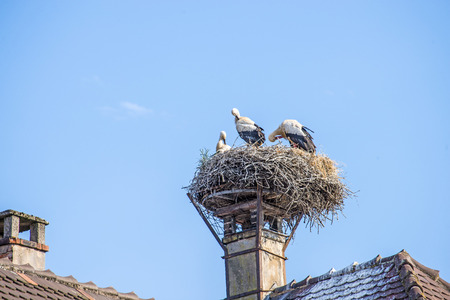 procreation: stork in a nest