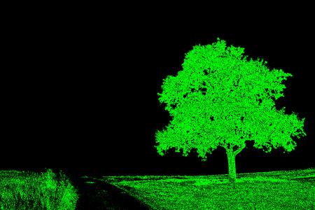 the way: tree on a way