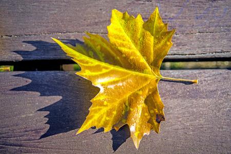 banc de parc: leaf on a park bench