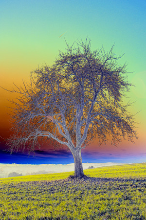 pear tree: old pear tree in rainbow colors