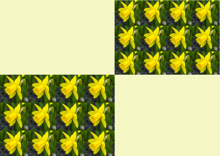 daffodil: stationery with daffodil flowers