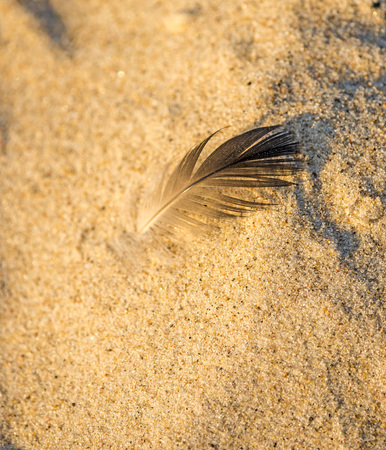 holidays vacancy: feather on a beach Stock Photo