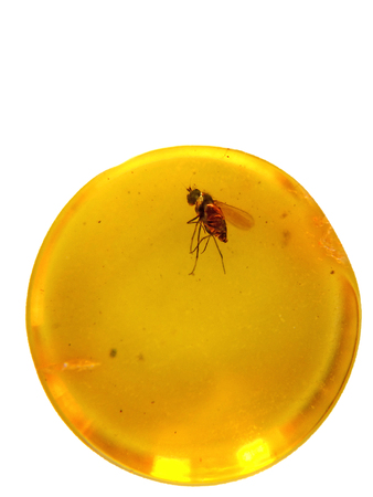 entrapment: Amber with embedded insect Stock Photo