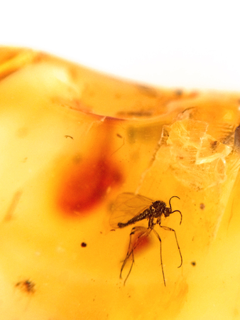 Amber with embedded insect Stock Photo