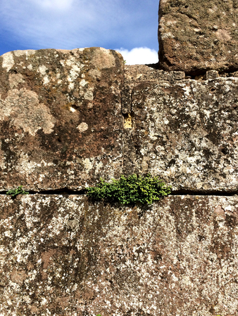 castle wall: french castle wall with plants Stock Photo