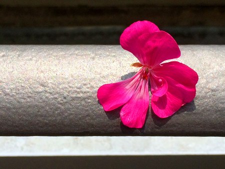 dormant: Geranium leaf on balcony railing