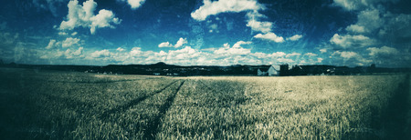 past production: field of rye in retro style