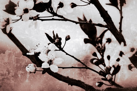 transience: Japanese cherry blossom in vintage style