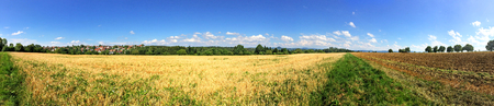 stubble field: panoramic view over stubble field and acre in summer