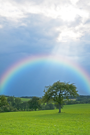 shafts: tree with rainbow