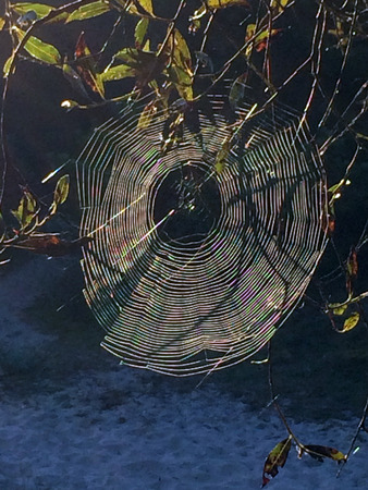 brigth: spider web in back light Stock Photo