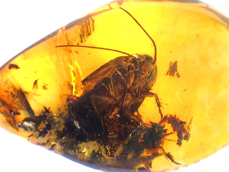 Amber with embedded beetle Stock Photo